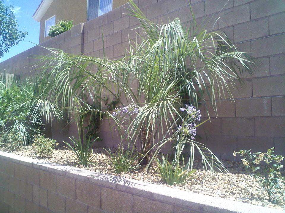 Backyard Design Garcia Landscaping Amp Lawn Service